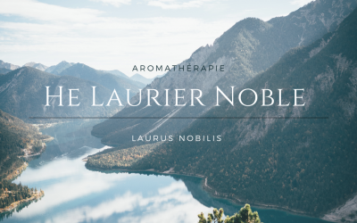 L'huile essentielle de Laurier noble, celle qui nous donne du courage
