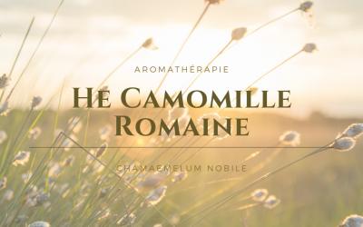 l'Huile essentielle de Camomille romaine, la puissance de l'été