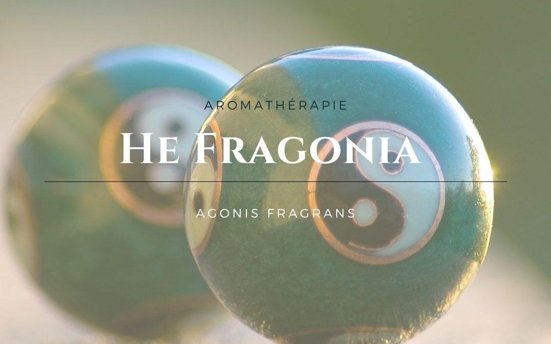 L'huile essentielle de Fragonia, renouer avec l'énergie Yin